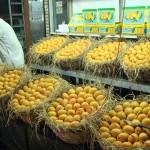Indian-mangoes
